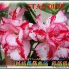 Star Dust Top Sell Adenium Obesum Desert Rose 5 seeds per pack
