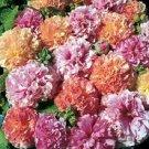 30 SEEDS ALCEA DOUBLE HOLLYHOCK FRUITY MIX FLOWER SEEDS / PERENNIAL