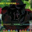 Mary Poppins Adenium Hybrid Bonsai 5 Seeds per pack 2NS18
