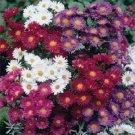 Duchess White Alpinus Mix Flower 100 Seeds