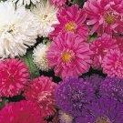 Fresh Aster Flower Pot Patio Mix 100 Seeds