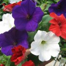 Petunia Fresh garden Candypops Old Glory Mix Flower 50 Seeds