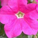 Petunia Fresh garden Ultra Pink Flower 50 Seeds