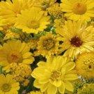500 Wildflower Seeds Yellow Wildflower Mix Wild Flower Flower Seeds