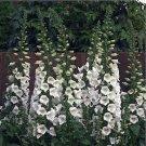 Big Sale Fresh Foxglove Perennial Flowers Spring Bloom White 250 Seeds