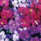 Purple Rock Aubrieta Aubrieta royal mix Resistant Perennial Flower 50 seeds per pack