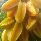 Star Fruit 5 seeds Fresh From My Garden