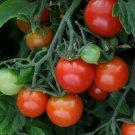 TOMATO TOTEM 15 seeds HEIRLOOM vegetable garden