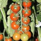 RED CHERRY TOMATO Sweetie 15 Seeds SWEETEST JUICE