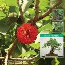 Papyrifera Ornamental Mulberry x50 Seeds no fruit