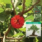 Bonsai Papyrifera Ornamental Mulberry 50 Seeds no fruit