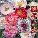 200 Seeds POPPY Shirley Double high germation