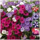 200 seeds PETUNIA Happy Colours garden decore