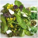 Premium Sorrel French Green De Belleville 100 Seeds