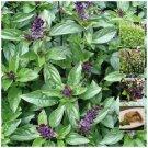 BASIL Cinnamon Fresh aroma therapy 100 seeds
