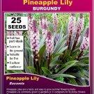 PINEAPPLE LILY - (Eucomis) BURGUNDY - 25 x SEEDS