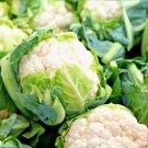 50 seeds vegetable Cauliflower - All Year Round