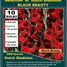Gladiolus BLACK BEAUTY  10 buls