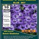 Gladiolus  Gladioli BLUE SKY  10 buls