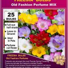 25 seeds FREESIA SEEDS Old Fashion Perfumed mix color