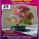 Japanese Maple Dwarf- Autumn Glory 25 seeds high germation