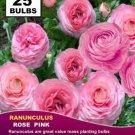 Flower Garden With 25 bulbs RANUNCULUS BULBS ROSE PINK