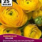 25 seeds fresh RANUNCULUS BULBS Buttercup Yellow