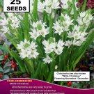 Chin che rin chee fresh white Mass Planting 25x SEEDS