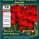 10 bulbs collection GLADIOLUS Gladioli OSCAR