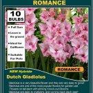 10 bulbs collection GLADIOLUS Gladioli ROMANCE