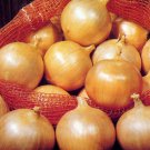 150 seeds Onion YELLOW SPANISH EARLY Vegetable Garden