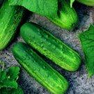 CUCUMBER Pioneer F1 10 Seeds Vegetable Garden SPRING SUMMER veggie