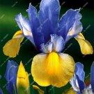 Nature plants Orchid bonsais 20 seeds per pack