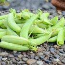 Sweet Green Sugar Ann Pea 50 Vegetable Seeds
