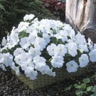 Trilogy White Trailing Petunia 25 Pelleted Seeds
