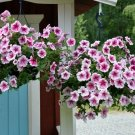 Opera Supreme Raspberry Ice Trailing Petunia 25 Pelleted Seeds