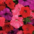 Mix color Easy Wave South Beach Trailing Petunia 25 Pelleted Seeds