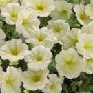 Opera Supreme Lemon Trailing Petunia 25 Pelleted Seeds