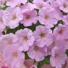 Trilogy Pink Lips Trailing Petunia 25 Pelleted Seeds
