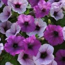 Easy Wave Plum Pudding Mix Trailing Petunia 25 Pelleted Seeds