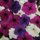 Easy Wave Great Lakes Mix Trailing Petunia 25 Pelleted Seeds