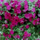 Tidal Wave Purple Petunia 25 Pelleted Seeds