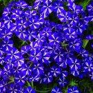 Verbena garden decore Blue Star USPS Tracking
