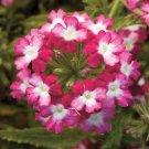 Verbena garden decore Pink Twist USPS Tracking