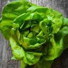Uk Vegetable Butter Lettuce 5 Seeds Green Sweet