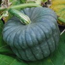 Queensland blue pumpkin pepper 8 seeds