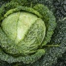 70 seeds Savoy Cabbage (Winter King B. Oleracea)
