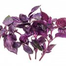 100 seeds Basil (Purple Ruffles)