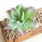 UK Only Small Pointed Lotus Artifical Simulation Fake Mini Succulents