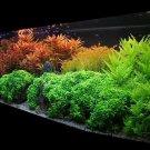 POTASSIUM Nitrate hydroponic fertilizer 1.5 lb saltpeter for plants (aquarium)
